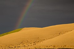 Up On Goose Creek (Dex Horton Photography) Tags: palouse rainbow wheat farm farming rain sun storm gold potofgold golden spectacular harvest bestof washingtonstate dexhorton