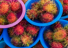 Rambutan (SDRPhoto321) Tags: art air botanical blue canon color colorful city dof depthoffield eos expression elevated exposure florida festival great haven inspiring light lands mighty new nature national outdoor outside orange perspective purple reflection red sunny sun tree urban vista wet worth