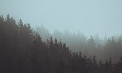 2975 (sul gm) Tags: bosque forest fog mist misty morning paisvasco basquecountry spain espaa outdoors nature pines pinos conferas neblina cielo trees