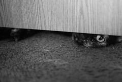closed door! (summerskyphoto) Tags: door eye cat paw cateye thelittledoglaughed