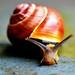 16. Snail-face