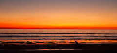 Sunset @ Cable Beach (Timothy TL) Tags: sunset orange playing beach colors beautiful childhood kids composition swimming swim sunrise canon children landscape 50mm bay photo kid long exposure child australian picture sigma australia cable perth 7d western wa westernaustralia broome cablebeach pictureque