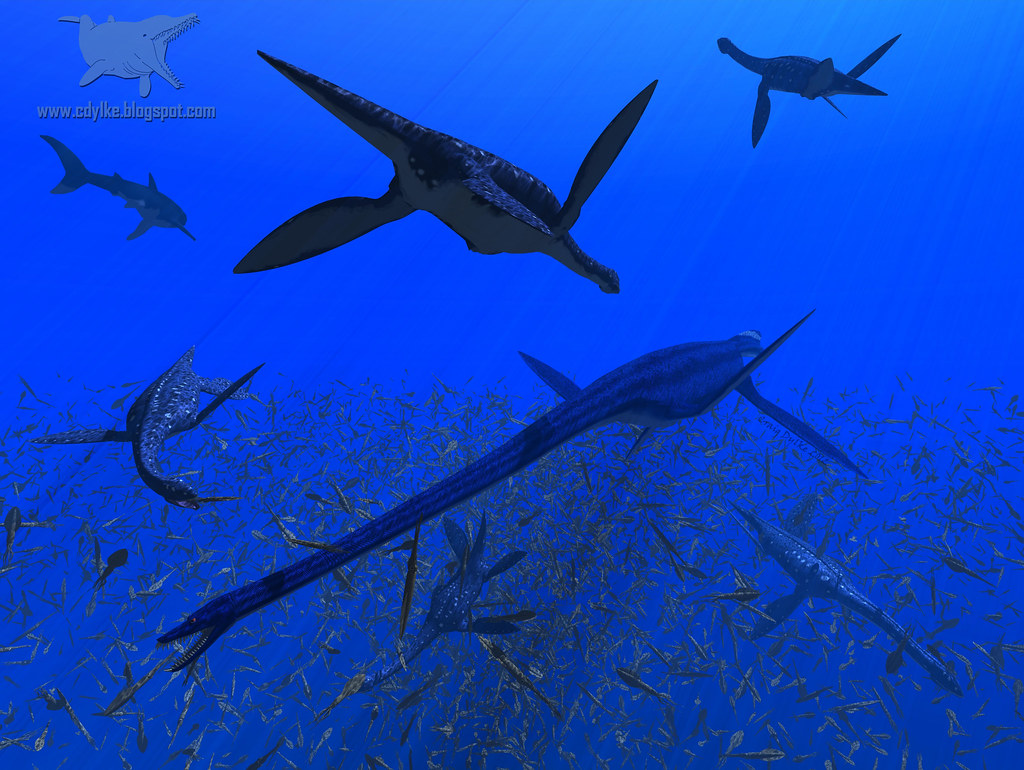 The World's newest photos of elasmosaurus - Flickr Hive Mind - photo#23