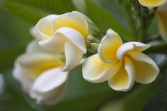 Flowery Softness (Djenzen) Tags: flower zoo emmen bloem dierentuin dierenpark