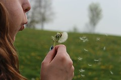 (vickileggett) Tags: portrait girl landscape blowing blow dandelion wish wishing