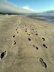 (jacki-dee) Tags: summer beach oregon coast sand pacific footprints beachgarden