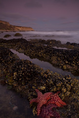 Starfish at Crystal Cove, Newport Beach (Richard Thelen) Tags: ocean california trip travel blue sunset vacation usa color art beach nature water digital canon landscape geotagged photography eos star coast photo sand rocks pacific starfish dusk d wide sigma wideangle pacificocean filter bikini photograph lee filters polarizer 1020 cokin 77mm sigma1020 nohdr singhray cokinfilters leefilters neturaldensity cokinz singhrayfilters