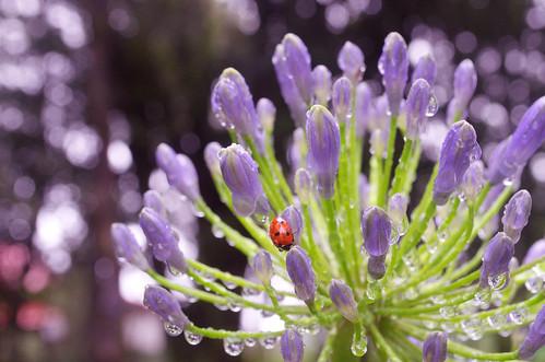 Beauty Bug !! by priyam.n, on Flickr