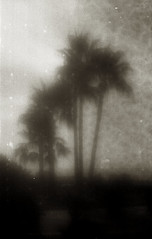 A wasted summer (O9k) Tags: trees film lensbaby analog 35mm palms landscape pinhole softfocus hp5 135 sitges ilford zoneplate composer pictorial selfdeveloped canoneos3000v pictorialism homedeveloping baddeveloping