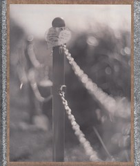 bokeh (graflex45) Tags: bw film monochrome analog vintage polaroid blackwhite bokeh anniversary large instant expired graflex type54 speedgraphic ektar 7inch peelapart 4×5 aeroektar 178mm