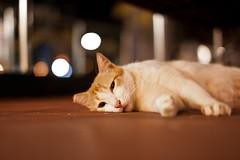 (:: ZP ::) Tags: park street blue broken cat canon relax 50mm dof floor sleep kitty sigma snap tired lying 5dmark2
