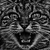 THE CAT (erlst24) Tags: blackandwhite bw cat nikon chat noiretblanc nb hdr d7000 artistichdr hdrterrorist thebestofblackwhite erlst24 ericlesot