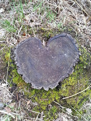 love stump (scubbard) Tags: tree love nature forest woods heart samsung galaxy stump guildford s2 flickrandroidapp:filter=none