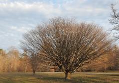 IMG_6963 (sandy richard) Tags: gardens longisland plantingfields plantingfieldsarboretum sandyrichard sandrarichard