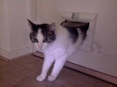 20160722-134801-i-1 (Catflap central) Tags: cat catdoor katzenklappe raspberry pi camera cats catflap kattenluik catflapj2nnl pet meow