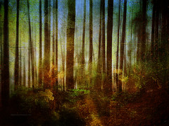 Painted Forest (Gianmario Masala) Tags: textures textured photoshop gimp blur blurry photomanipulation dark photograph gianmariomasala forest trees colors painterly pictorial krita sky leaves green light shadows canon