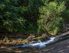 Round Spring Branch (Vincent Parsons) Tags: round spring ozarks branch low water bridge rocks willow walnut mo missouri summer ozark national scenic riverways