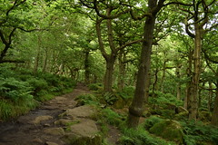Woodland Path (Oliver MK) Tags: woodland path forest wood woods green national park peak district nikon d5500 landscape