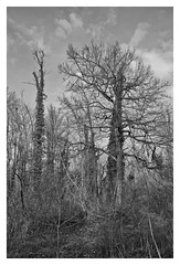 riverside woodland (e27182818284) Tags: sigma1020mmf35exdchsm riversidewoodland winter