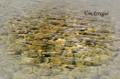 Detalle en el estanque (mArregui) Tags: wwwarreguimeluscom marregui nikon parque lapolvoranca parquedelapolvoranca polvoranca legans alcorcn madrid comunidaddemadrid