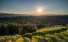 South Styrian Epicness (Wim Air) Tags: sony a7r south styria sundown wineyards green sun bernhard wimmer wimairat