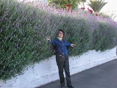 Auckland, New Zealand (gttexas) Tags: 2009 angie auckland cruise devonport harrison lavender newzealand starprincess flower