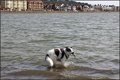 West Kirby Wirral  230816 (18) (over 4 million views thank you) Tags: westkirby wirral lizcallan lizcallanphotography sea seaside beach sand sandy boats water islands people ben bordercollie dog beaches reflections canoes rocks causeway yachts outside landscape seascape
