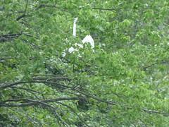 Bayard Cutting Fields Arboretum (88) (pensivelaw1) Tags: suffolkcounty newyorkstate longisland bayardcuttingarboretumstatepark