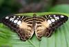 K46A8051 (Yvonne23021984) Tags: schmetterling butterfly hamm germany deutschland maxipark markro photography macrophotography canon canonphotography markofotografy canoneos7dmarkii insects insekten nature naturfotografie naturephotography closeup colorkey schmetterlinge butterflies