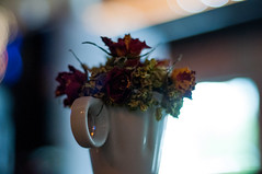 (Oscar Nuez Vargas) Tags: nikon flowers bokeh