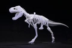 IMG_6875 (Barman76) Tags: bonelab trex tyrannosaur skeleton plastic laser cut