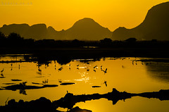 Duck To Go (Andrew Kudrin) Tags: thailand asia sunset duck bird lake river water amazing awesome beatiful heron
