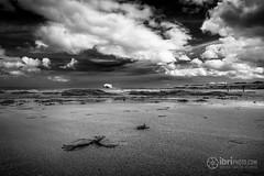 North Berwick - Bass Rock - 02.jpg (ibriphotos) Tags: blackandwhite northberwick gannet beach bass eastlothian seabird break friends polariser riverforth polarizer firthofforth daytrip weekend caravan
