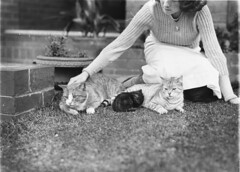 Girl with two cats and a kitten, c.1929, Ted Hood (State Library of New South Wales collection) Tags: statelibraryofnewsouthwales