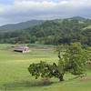 White Barn and Crumbling Oak (James L. Snyder) Tags: quercus oak trees foliage forest grass foothills hills mountains mountainside slope valley meadow pasture grassland barn road trail ranch countypark park native oldgrowth gnarled smooth crumbling vernal lush luxuriant verdant old weathered rustic rural country pastoral bucolic green sunlight sidelighting filteredlight shadows mellow soft delicate bluesky cumulus clouds cloudy tranquil peaceful idyllic venerable whitebarn washburntrail josephgrantcountypark hallsvalley yerbapeak ranchocañadadepala bayarea sanjose santaclaracounty diablorange coastalmountains california usa square treesonhills afternoon march spring 2015