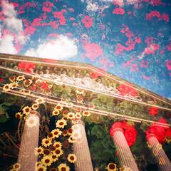 Paris, Flowers (Sugar Crisp) Tags: summer paris film 35mm exposure kodak july mini double diana 100 analogue 2012 ektar