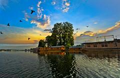 Beauty of Nature at Sunrise !!!    Nagin Lake Srinagar ! (Rambonp love's all creatures of Universe.) Tags: morning blue trees sky india lake mountains green nature water birds yellow clouds canon landscape ripples kashmir hdr jk houseboats shimmer naginlake