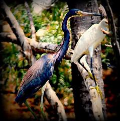 2012_07_02_2278_pe_pe (The Nature of My World) Tags: me2youphotographylevel1 freedomtosoarlevel1birdphotosonly