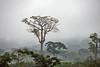 On the road... (jendayee) Tags: road trees green nature fog angola flickraward flickrtravelaward