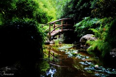 Bridge at Isamu Taniguchi Japanese Garden