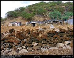 Shihait, Taqah, Dhofar (Shanfari.net) Tags: nature season lumix raw natural panasonic oman fz zufar rw2 salalah sultanate dhofar  khareef    dufar      dhufar governorate dofar fz38 fz35 dmcfz35