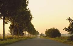 DSCF7568 (Hanna Alic) Tags: street camino marsch weg abenddmmerung niedersachsen baumallee strase