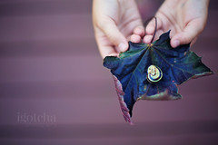 Learning is a treasure that will follow its owner everywhere. Chinese Proverb (photos=happiness - I am back!!) Tags: summer nature closeup canon fun leaf holding hands colours child bokeh snail hbw igotchaphotography