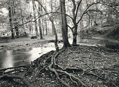 Rinderbach IIa (Willi Morali) Tags: trees ilford fp4 heimat landcape vogelsang swa alpa natureslight finol autaut eco4812 moerschphotochemie mt1selenium rollfilm6x8