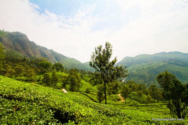 Tea Gardens And Mountains At Munnar, Kerala