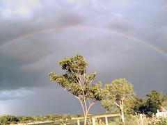 rainbow (Karthik SWOT) Tags: nature rain rainbow raintree rainseason rainbowtree kallanai indianature rainbowrain