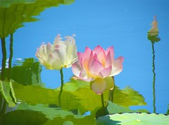 Reflection of Lotus Flowers (Stanley Zimny (Thank You for 16 Million views)) Tags: flowers reflection water garden botanical mirror lotus bronx reflexions