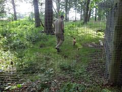Fife Deer Park - Fox v1 (McColl Family) Tags: st inn andrews peat pittenweem monans