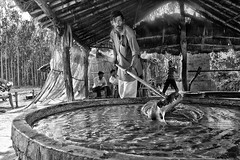 Making Gur / Jaggery and More out of Sugarcane Juice in India (Anoop Negi) Tags: india up cane sugar making anoop dehradun pradesh negi uttar gur jaggery uttarakhand ezee123 chhutmalpur