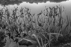 Water-Weeds (desouto) Tags: flowers sky nature water clouds stream stones lakes ponds hdr